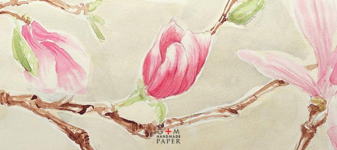 Floare de magnolie detaliu