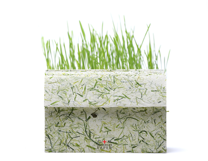 Plic eco cu iarba verde